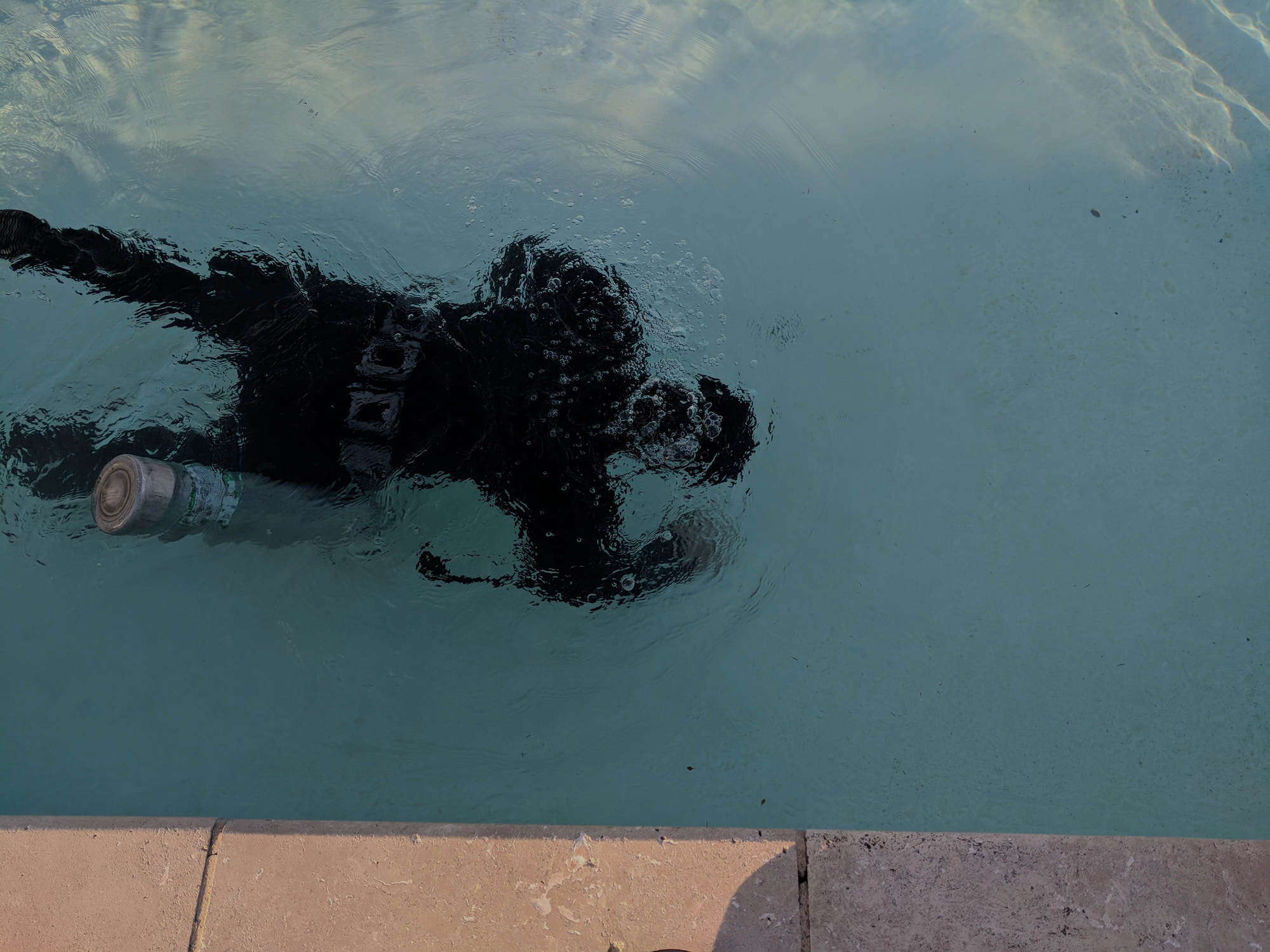 Pool Leak Services