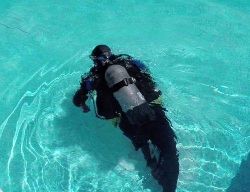 What is a Dive and Dye Test?
